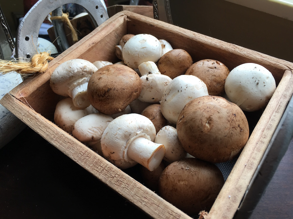 a container of mushrooms